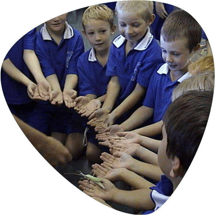 Bugs Ed Primary Schools Workshops