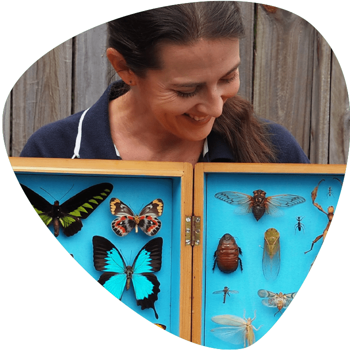 Bugs Ed Insect curation