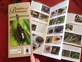 Bugs Ed Beetles of Brisbane