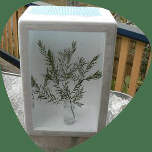 Bugs Ed Make your own bug box