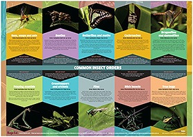 Bugs Ed common orders poster