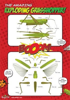 Bugs Ed Exploding grasshopper poster
