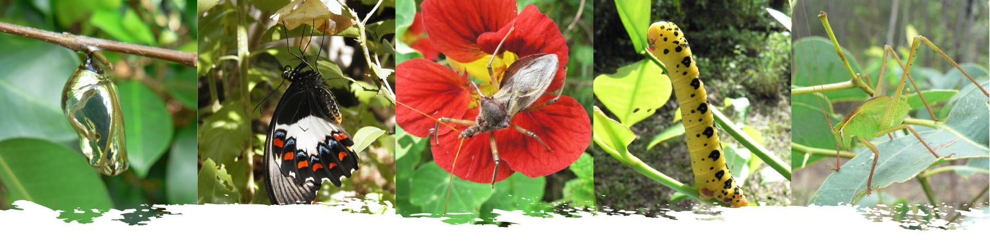 insect-photo-strip