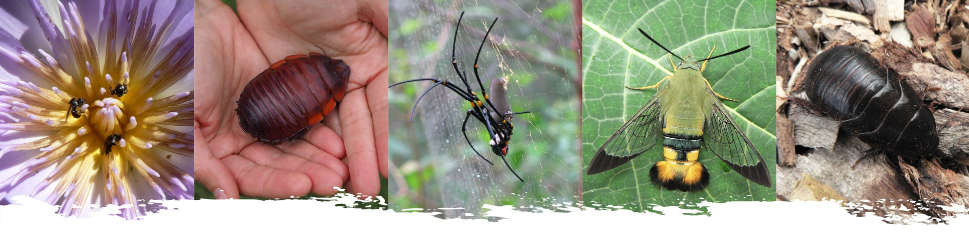 insect-photo-strip2