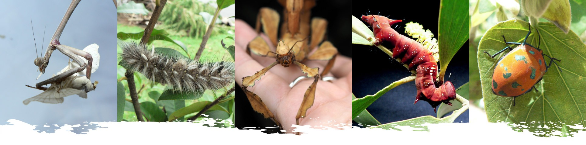 insect-photo-strip4