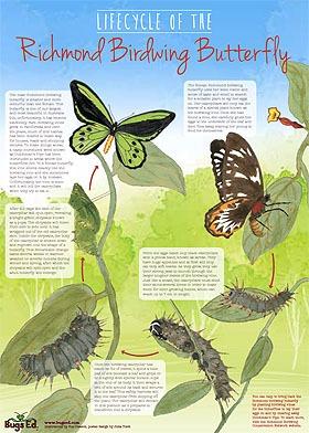 Bugs Ed Richmond Birdwing Poster