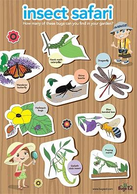 Bugs Ed Insect Safari