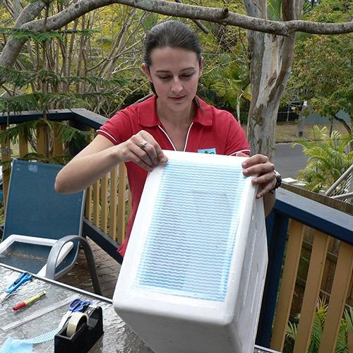 Bugs Ed Bug Box taping top of box